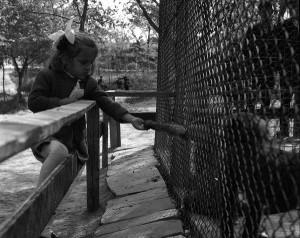 Зоолошката градина во Кавадарци во педесетите години на минатиот век Фото: Фејсбук страница на Општина Кавадарци