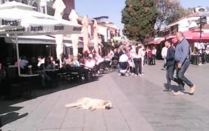 Охрид - Опуштен и релаксиран изборен ден Фото: Вистиномер