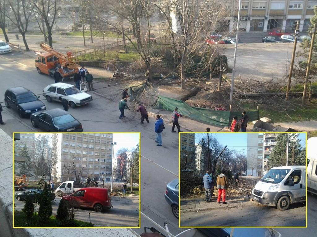 Сеча на дрва во скопска Автокоманда за да се ослободи простор за подземни контејнери за отпад. Фото: Вистиномер, декември 2014