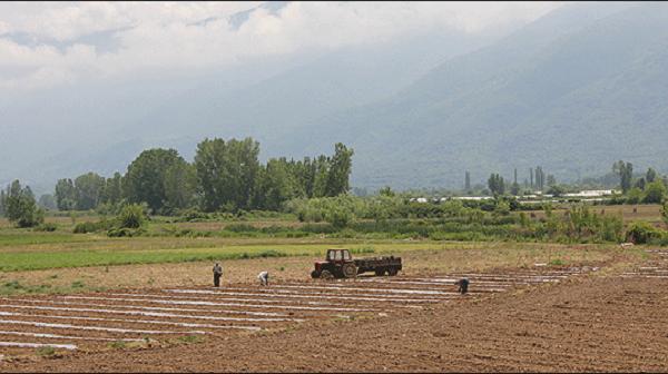"""Njoftohet se bujqit prej muajit maj do të mund të aplikojnë për """"naftën e gjelbër"""". Foto: MIA"""